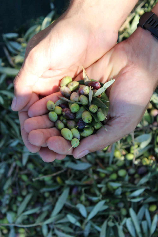 OlivenGut Oliven
